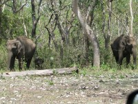 Pakhal-wildlife-sanctuary-2
